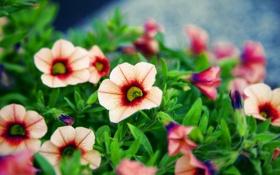 Картинка макро, цветы, красиво, фото, боке