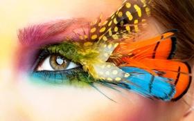 Картинка взгляд, макро, лицо, глаз, стиль, перья