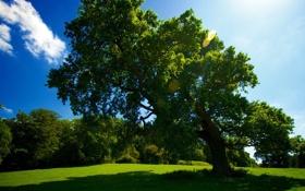 Обои лес, трава, солнце, природа, фото, дерево, поляна
