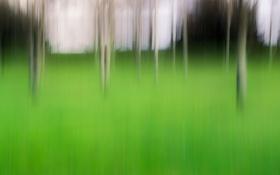 Обои природа, кусты, штрихи, трава, деревья
