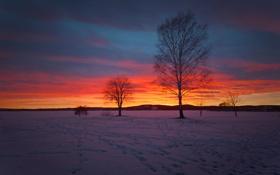 Картинка зима, поле, небо, облака, снег, деревья, природа