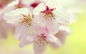 Обои цветок, дерево, цветение, нежно