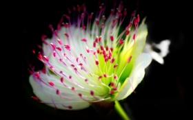 Картинка цветок, фон, растение, лепестки