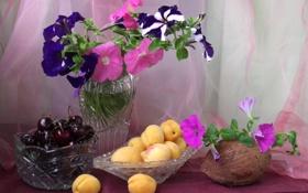 Обои фрукты, кокос, натюрморт, ягоды, петуния, абрикос, черешня
