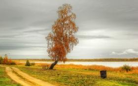 Картинка дорога, осень, природа, озеро, фото, дерево
