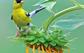 Картинка цветок, лето, макро, желтый, птица, подсолнух
