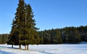 Обои зима, лес, небо, снег, деревья, ель