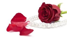 Картинка роза, лепестки, арт, жемчуг, бусы, бусины, красная