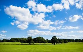 Обои зелень, поле, небо, облака, дерево, много, Peace Of Nature