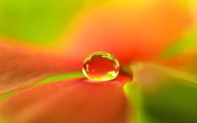 Картинка цветок, вода, роса, листок, капля