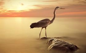 Картинка пейзаж, закат, птица