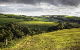 Обои деревья, холмы, поля, Англия, Корнуолл, деревенский пейзаж