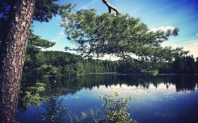 Обои лес, сосна, озеро, вода