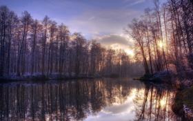 Картинка деревья, пейзаж, природа, озеро, утро