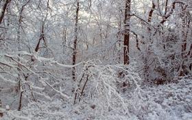 Обои зима, иней, лес, снег, деревья