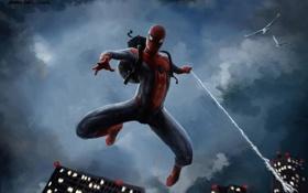 Обои птицы, ночь, человек, паук, Spider-Man