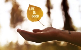 Картинка лист, рука, фраза, Life is Good