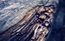 Картинка бревно, брёвна, дерево