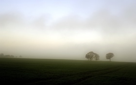 Картинка поле, деревья, пейзаж, туман