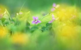 Картинка зелень, цветок, трава, цвета, макро, цветы, природа