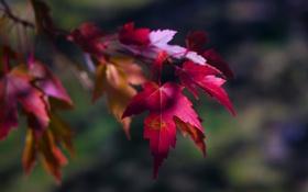 Картинка осень, листья, макро, природа, время года