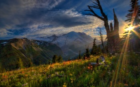 Картинка закат, цветы, горы, Mount Rainier National Park