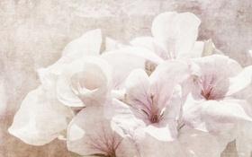 Картинка цветы, природа, стиль
