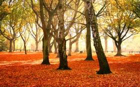 Обои осень, листья, деревья, природа, фото, дерево, листопад