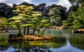 Картинка деревья, пруд, камни, обработка, Япония, сад, островок