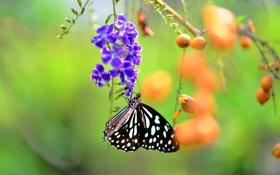 Обои бабочка, ветка, цветок, ягоды