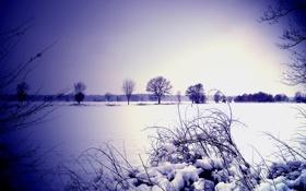 Обои зима, небо, снег, деревья, куст, горизонт, объектив