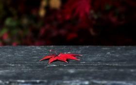 Обои поверхность, красный, лист, серая, кленовый