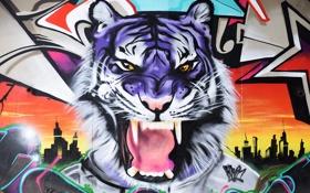 Обои цвета, тигр, стена, граффити, Graffiti