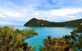 Обои море, побережье, Новая Зеландия, кусты, Tasman National Park