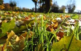 Обои Макро, Осень, Листья, Трава