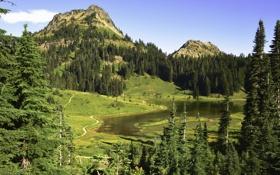Обои США, лес, Mount Rainier National Park, трава, зелень, озеро, деревья