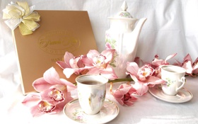 Обои flowers, orchid, cups