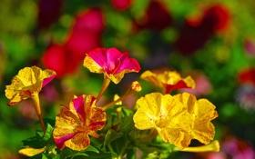 Картинка сад, лепестки, клумба, цветы