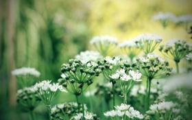 Обои цветы, стебли, боке