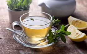 Обои цитрус, чашка, чай, лимон, стекло, блюдце