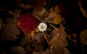 Картинка листья, макро, цветы, фон, widescreen, обои, размытие