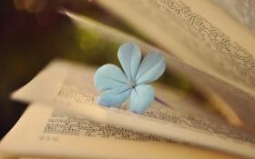 Обои цветок, книга, страницы