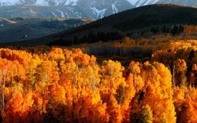 Обои осень, лес, горы