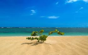 Обои море, берег, побережье, пейзажи, растение, куст, Бали
