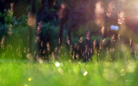 Обои grass, sunshine, Green, Spring