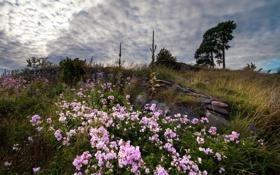 Картинка поле, небо, пейзаж, цветы, природа