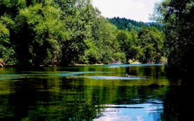 Обои деревья, река, камни