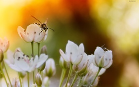 Картинка закат, цветы, пчела, bee