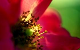Картинка цветок, солнце, макро, свет, красный