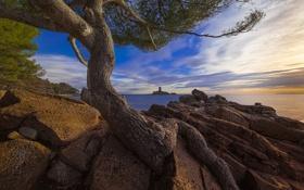 Картинка море, пляж, камни, дерево, остров, утро, залив